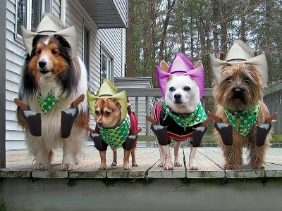 O.K. Corral  собаки собачки ковбойские шляпы