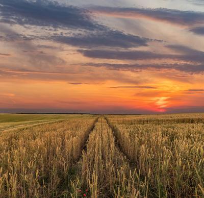 Летние вечера закат поле небо облака солнце дорога пшеница лето вечер