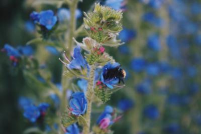 *** природа цветы пчела насекомое лето