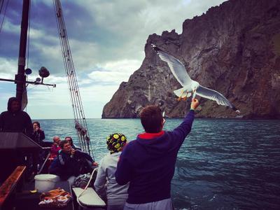 Кормление чаек Крым лето 2016 чайки рыбалка море