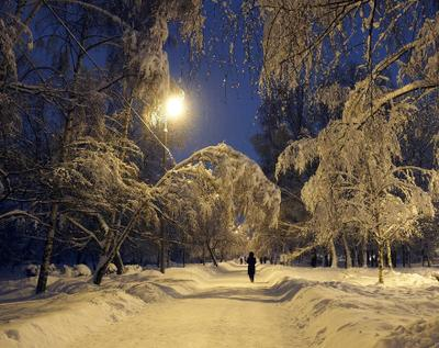 After snowfall night sky park trees snow
