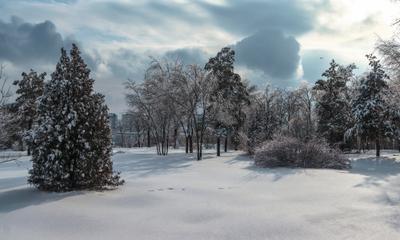 Зимний парк Зимний парк Красивая природа Победа зимний пейзаж лесная поляна зимняя сказка