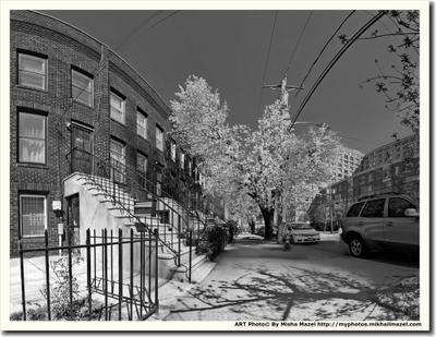 Джерси Сити. Пора цветения. город весна архитектура США Джерси Сити дерево деревья улица дом дома чёрно-белый чёрно-белое фото