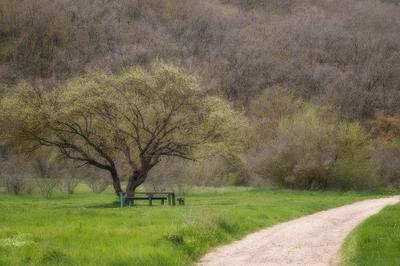 Третий кордон Лес дорога пейзаж