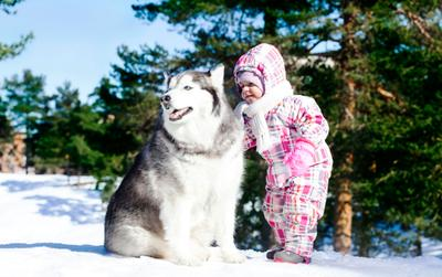 Доверие дети хаски собака фото фотограф детская съемка спб