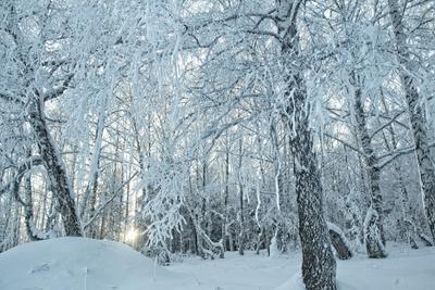 хрустальный закат зима природа березовая роща мороз прогулка иней закат