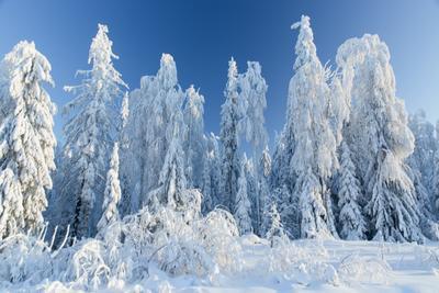кружевная зима*** Зима снег деревья