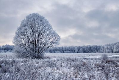 Winter tree дерево зима снег