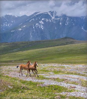 Догоняшки. горы алтай горный жеребёнок конь конёк гора пейзаж природа россия ник васильев красота