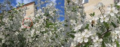 Весна в Лыткарине
