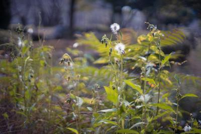 осень Japan