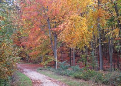 Осень в подпарижском лесу осень