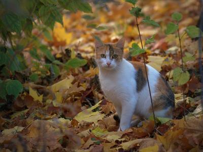 Кошка Осень.