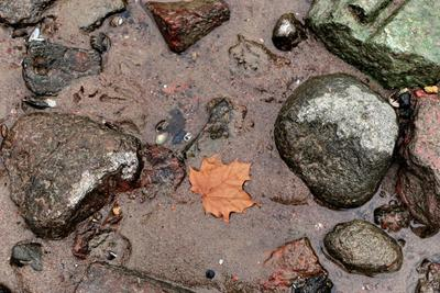 На осеннем берегу берег залив камни лист песок вода