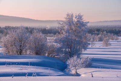 Утро морозное с дымком. север Кольский Заполярье Хибины