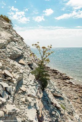 Жизнь на скале скала море цветы