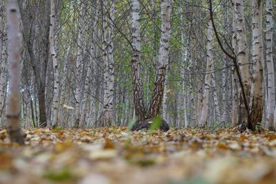 Ранняя осень, листвы листопад...