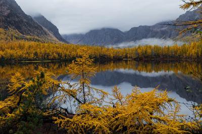 НАСТРОЕНИЕ - ОСЕНЬ. Забайкалье Озеро Лиственница Осень Кадарский хребет