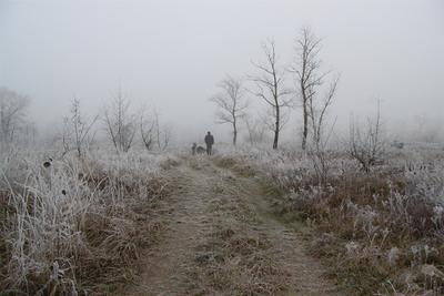 Дорога, уходящая в туман туман изморозь иней