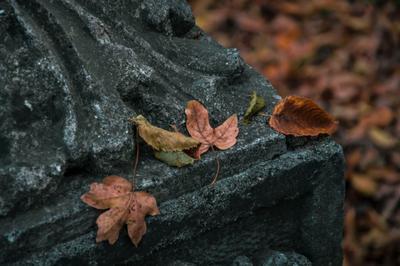 Осень осень листья бетон цветное