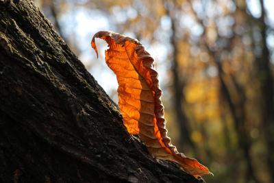 Гусеница. Шаварёв природа фотография
