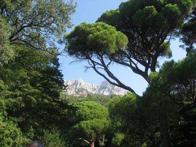 *** Горы деревья лето небо
