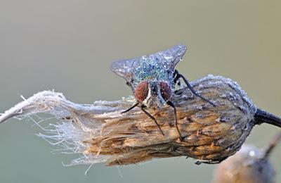 Заиндевелое... муха роса иней