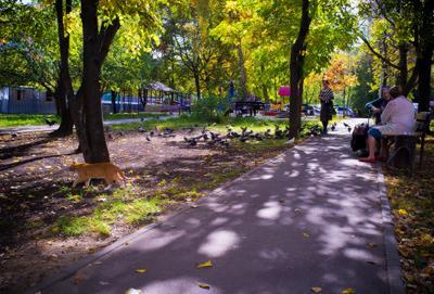 сытый рыжий гуляет мимо кот котэ двор осень голуби птички бабульки