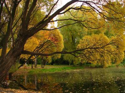 В парке парк осень