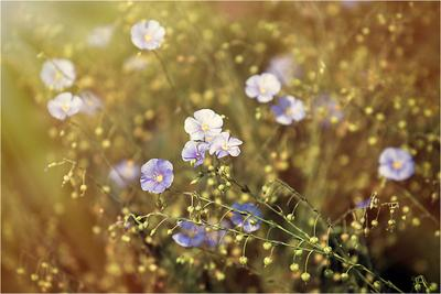 """Утро"" цветы уветок утро"