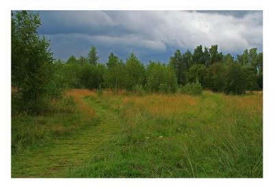 Перед грозой Гроза Калуга область дождь поляна трава