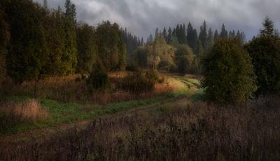 Про полянку с солнышком в серый дождливый день...