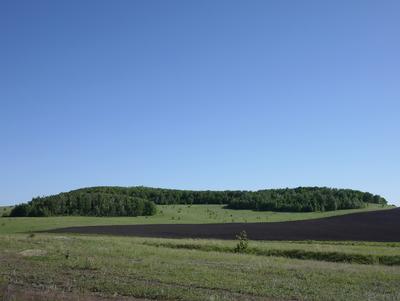 Березовая  роща,Саратовская область