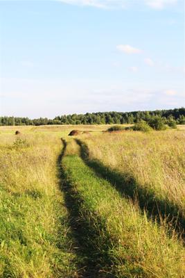 Поле Поле сеновал дорога природа
