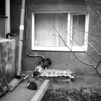 Окна, кошки и бордюры