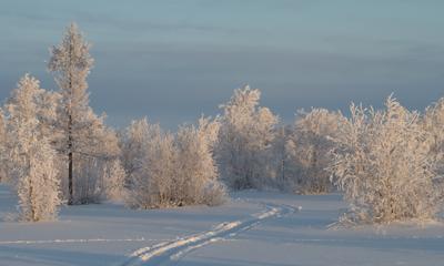 Типичный зимний пейзаж) Лес зима ноябрь Новый Уренгой