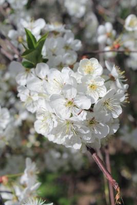 *** цветы весна flowers spring