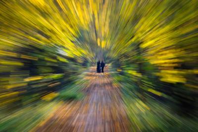 Закружила осень... зум-эффект осень природа парк