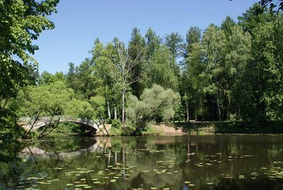 Старый пруд старый пруд мостик