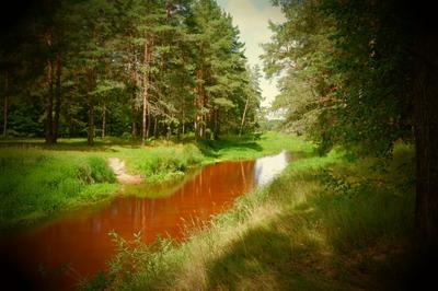 Рыжая речка Природа