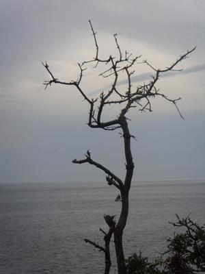 Грусть непогода, дерево, ветка, море, Черногория