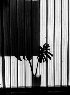 Flоwer Цветок тени арт ч б черное белое