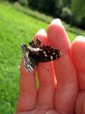 Совсем ручная...) бабочка