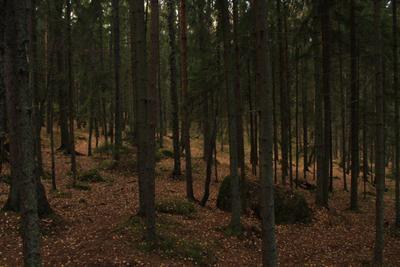 Монрепо Монрепо осень Осень Выборг Ленинградская область лес лесопарк