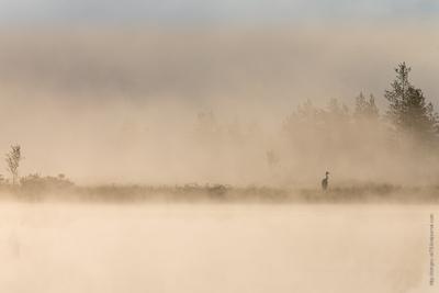 Журавль в тумане журавль