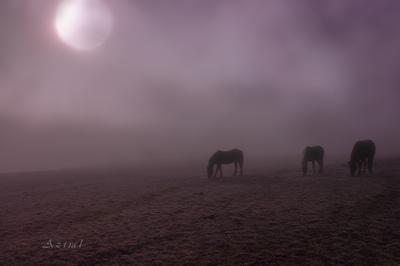 в лунном свете луна луг кони туман