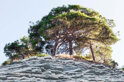 Деревья на скале... деревья скала кабардинка геленджик кемпинг