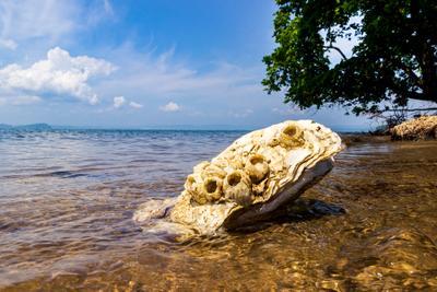 Загадка из моря