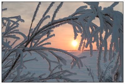 -33 по Цельсию зима мороз закат снег ветви иней