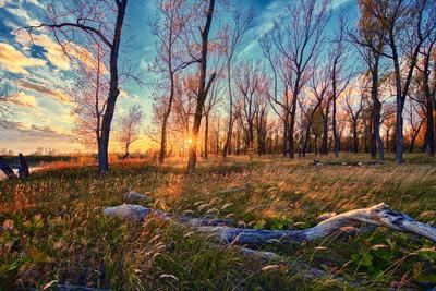 Закат на Тоболе Тобол Закат Лес Осень